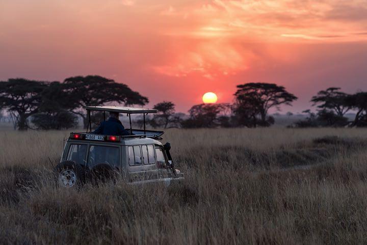 Safari Travel Insurance Serengeti Tanzania