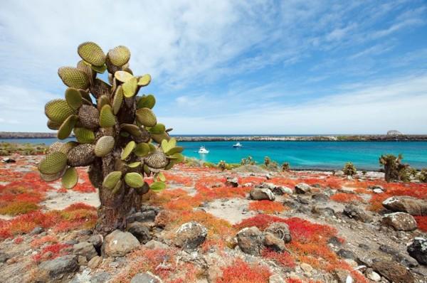 UnCruise Galapagos Cactus 1