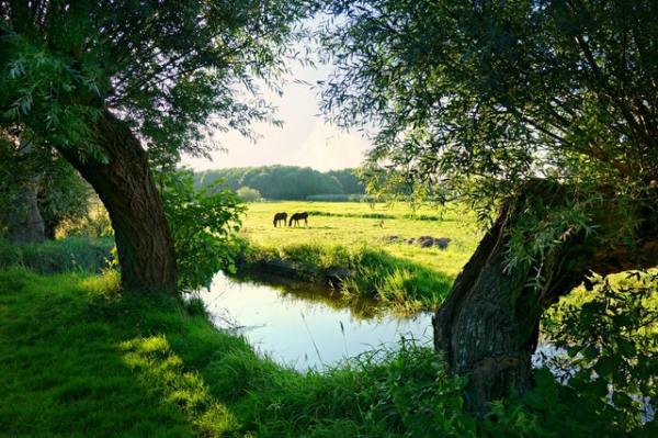 gate-1-aardy-horses-farm-holland