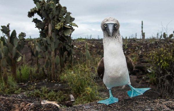 UnCruise Galpagos Blue 1