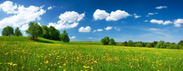 Eine Sommerwiese mit Bäumen unter blauem Himmel