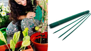 plant stakes to help them stand upright