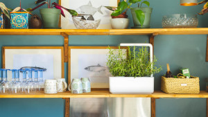 smart garden for growing herbs and spices