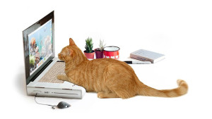 laptop inspired scratching post with orange cat