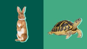 turtle and hare