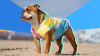 best coats for dogs