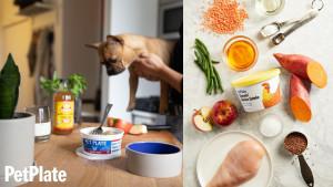dog meal plan
