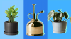 What to Buy If You're New to Plant Parenthood