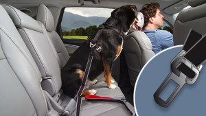 leash attachment that buckles your dog into the backseat so they don't slide around