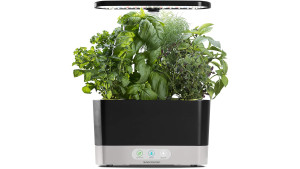 countertop black aerogarden to grow herbs like basil, thyme, and dill