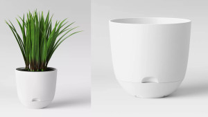 self-watering planter that holds water at the bottom