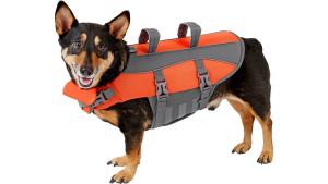 Dog with Orange Life Jacket