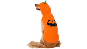 pumpkin-themed halloween dog sweater