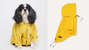 yellow dog rain coat with hood