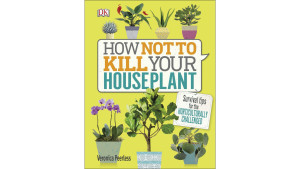 how to not kill your houseplant guide