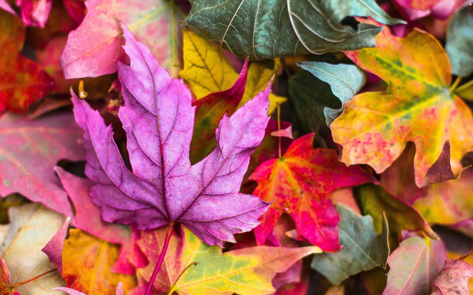 Top 10 HR Webinars for Autumn 2020