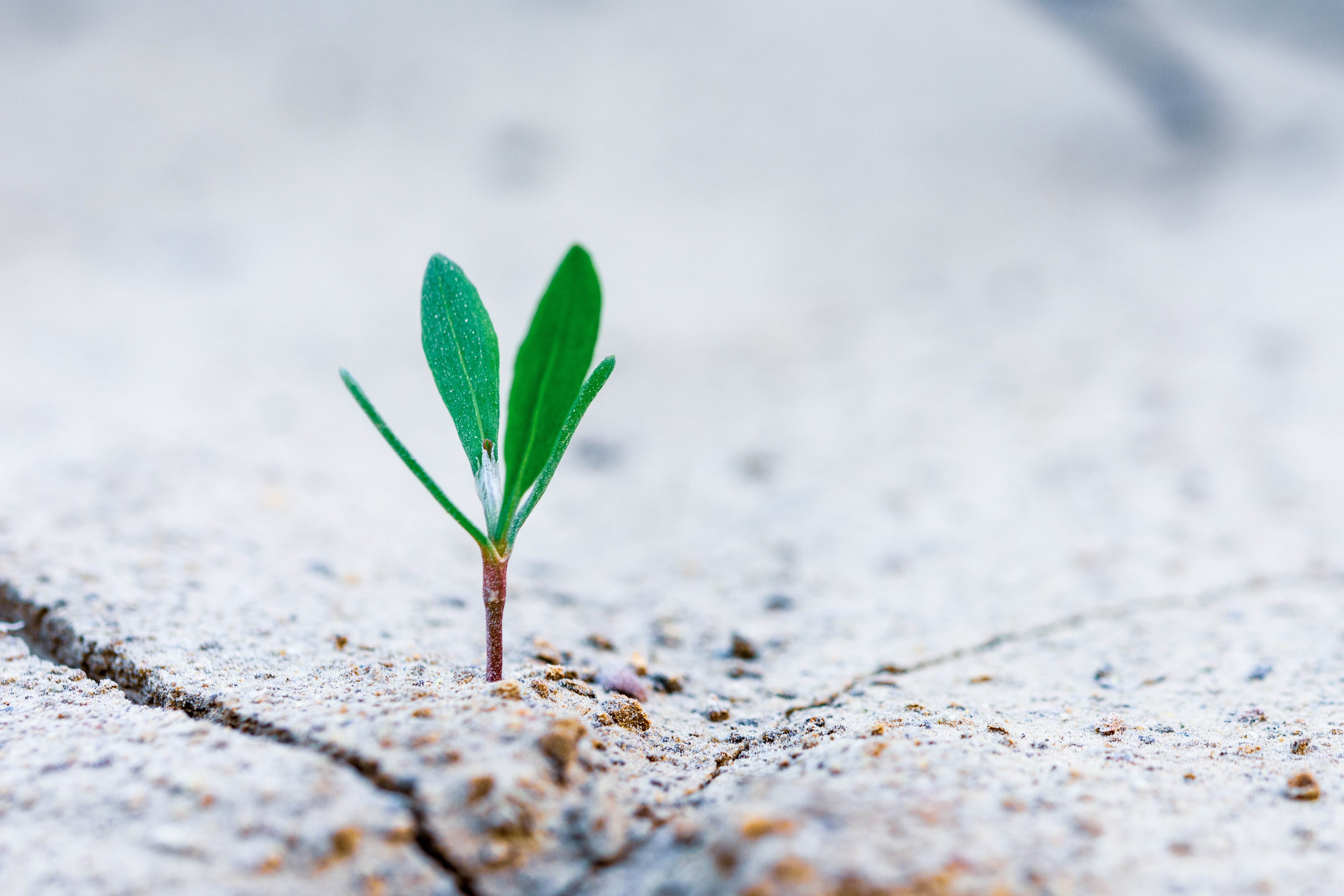 10 Fixed vs Growth Mindset Examples