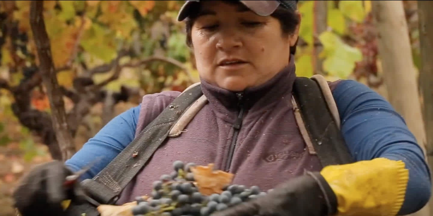 Fairtrade wine Chile