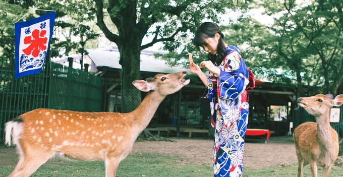 nara kyoto tokyo japan deer park nara park kimono experience