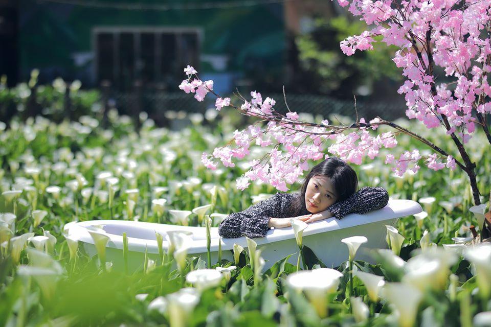 花谷海芋園的唯美浴缸造景