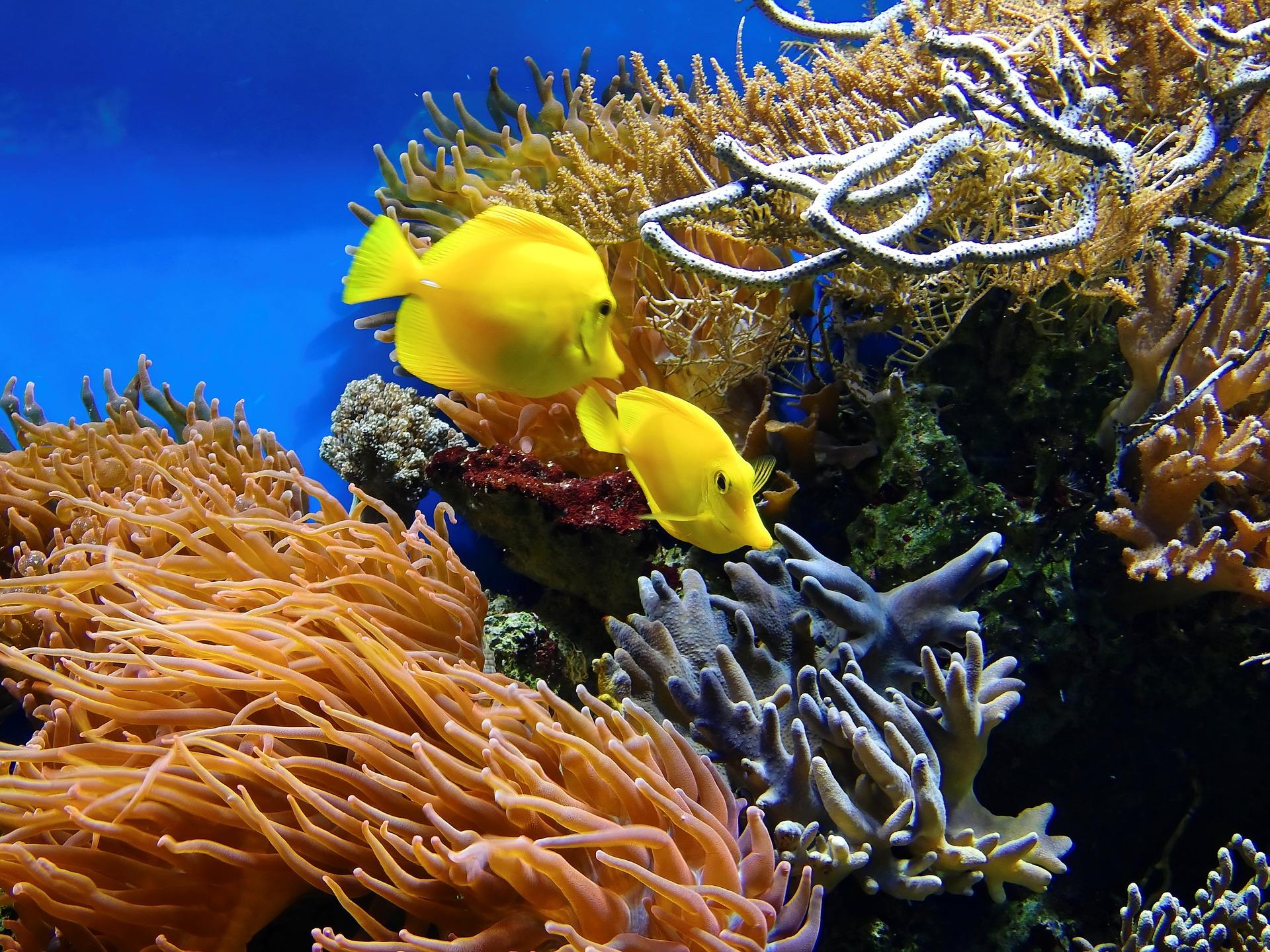 thuy-cung-sea-aquarium-singapore