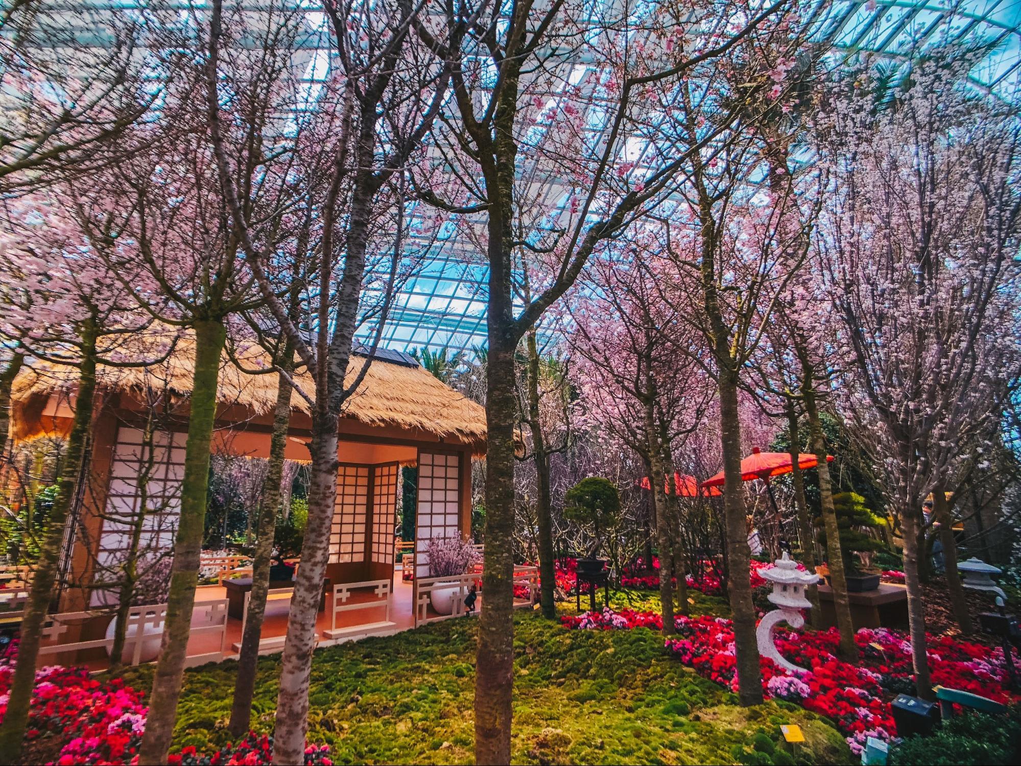 Sakura Selain di Jepang