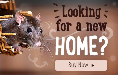 Rat Supplies & Rat Accessories | Extra 5% off on 1st orders