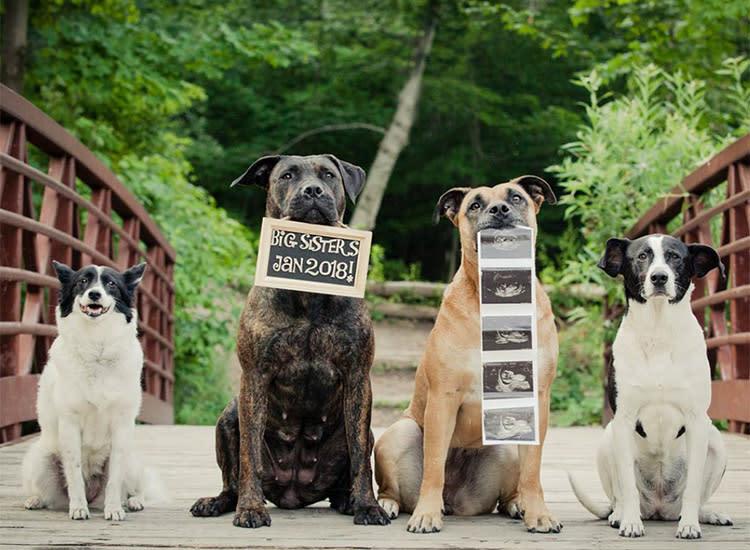Pregnancy Announcements Creative Dog Squad