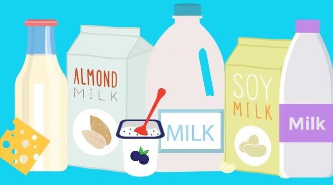 All different kinds of protein for toddlers including cow's milk, soy milk, almond milk yogurt and cheese.