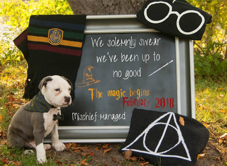 7e42939af4531 pregnancy-announcements-creative-harry-potter-dog