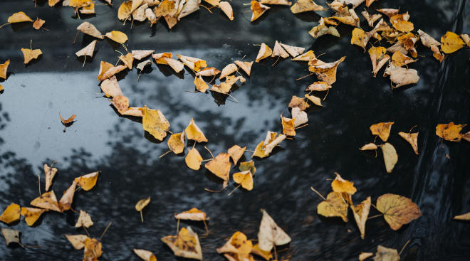 fall leaves on the ground in the shape of a heart