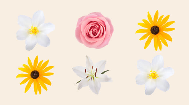 Collage of different flower types, including Jasmine, Rose, Susan and Lily.