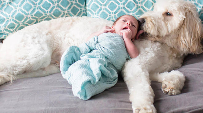 newborn baby snuggling with pet dog on the bed at home