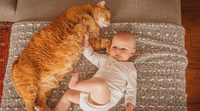 baby laying with big orange cat