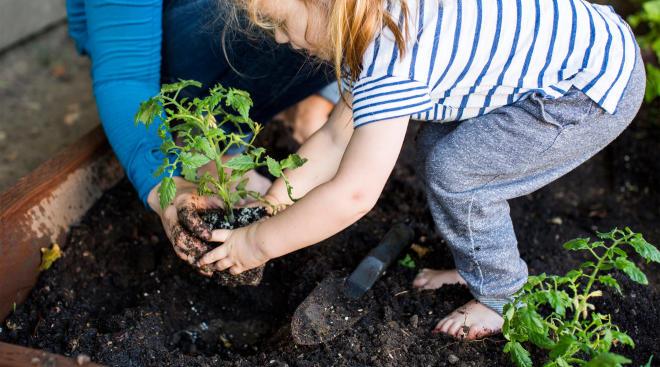 little girl gardening barefoot in the dirt