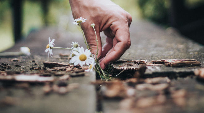 person picking flowers that have sprouted through the sidewalk