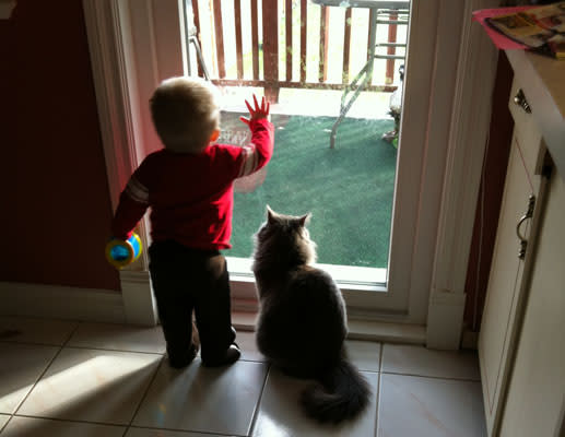 Baby And Pet Bffs