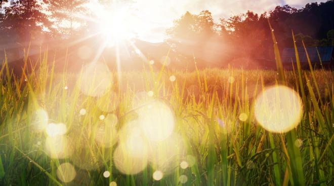 sun flares captured through nature landscape