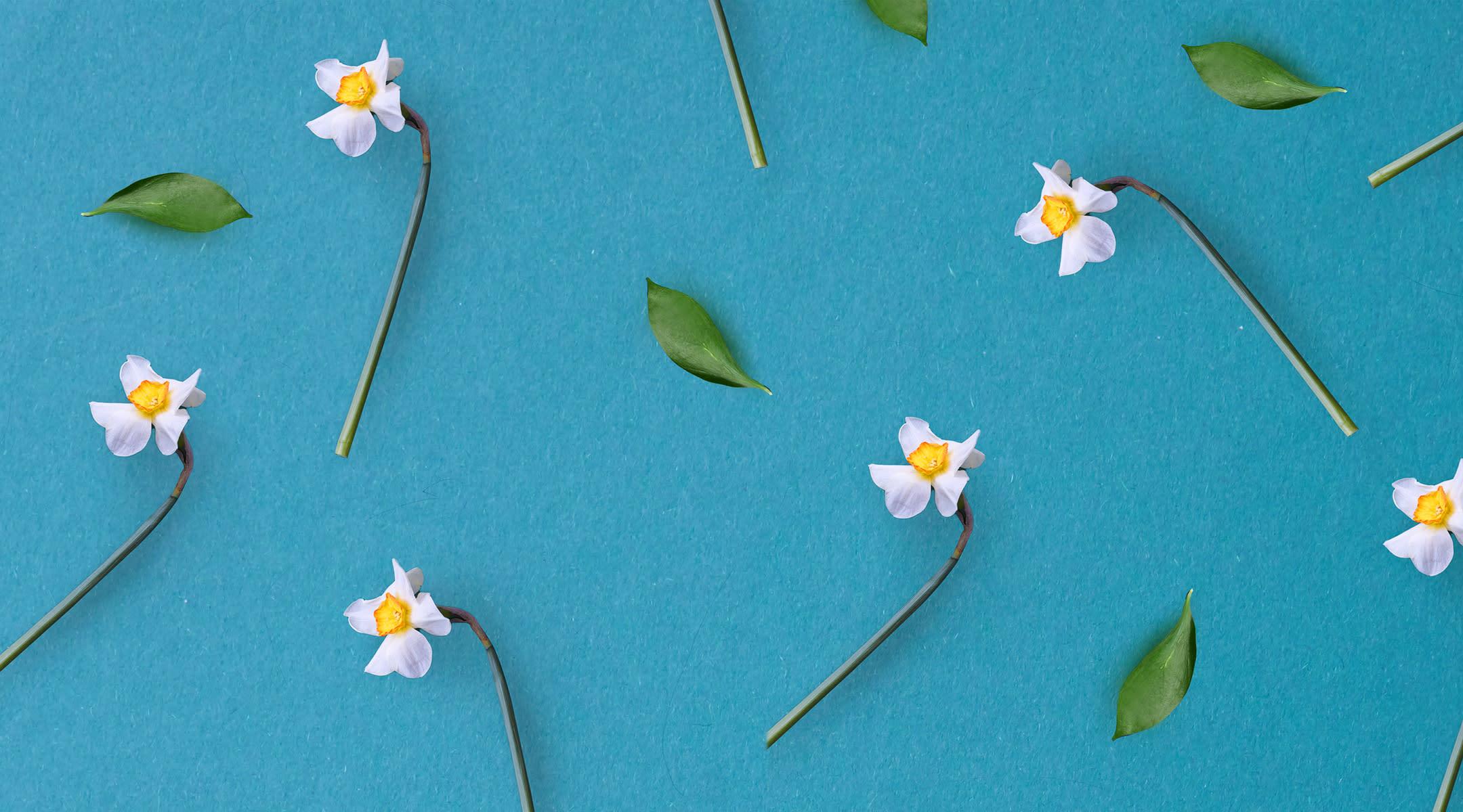 spring daffodils flat lay