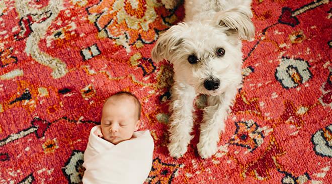 newborn baby sleeping next to small white dog