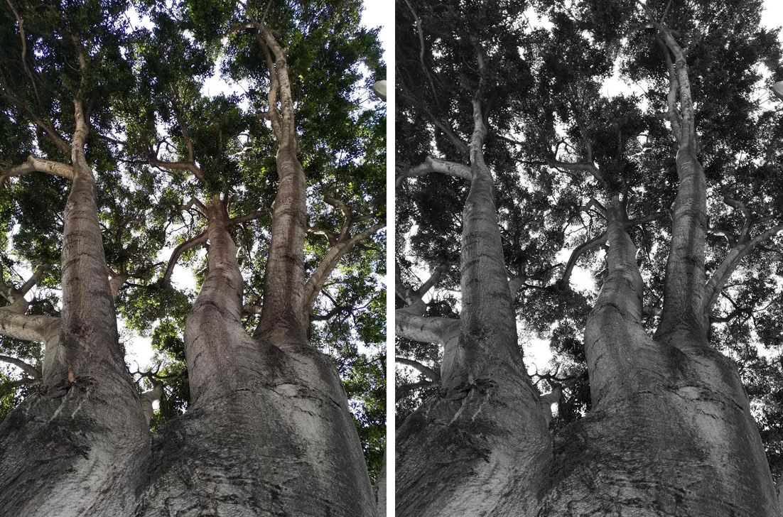 Essential Phone Camera Tree Tuning Mono to Fusion