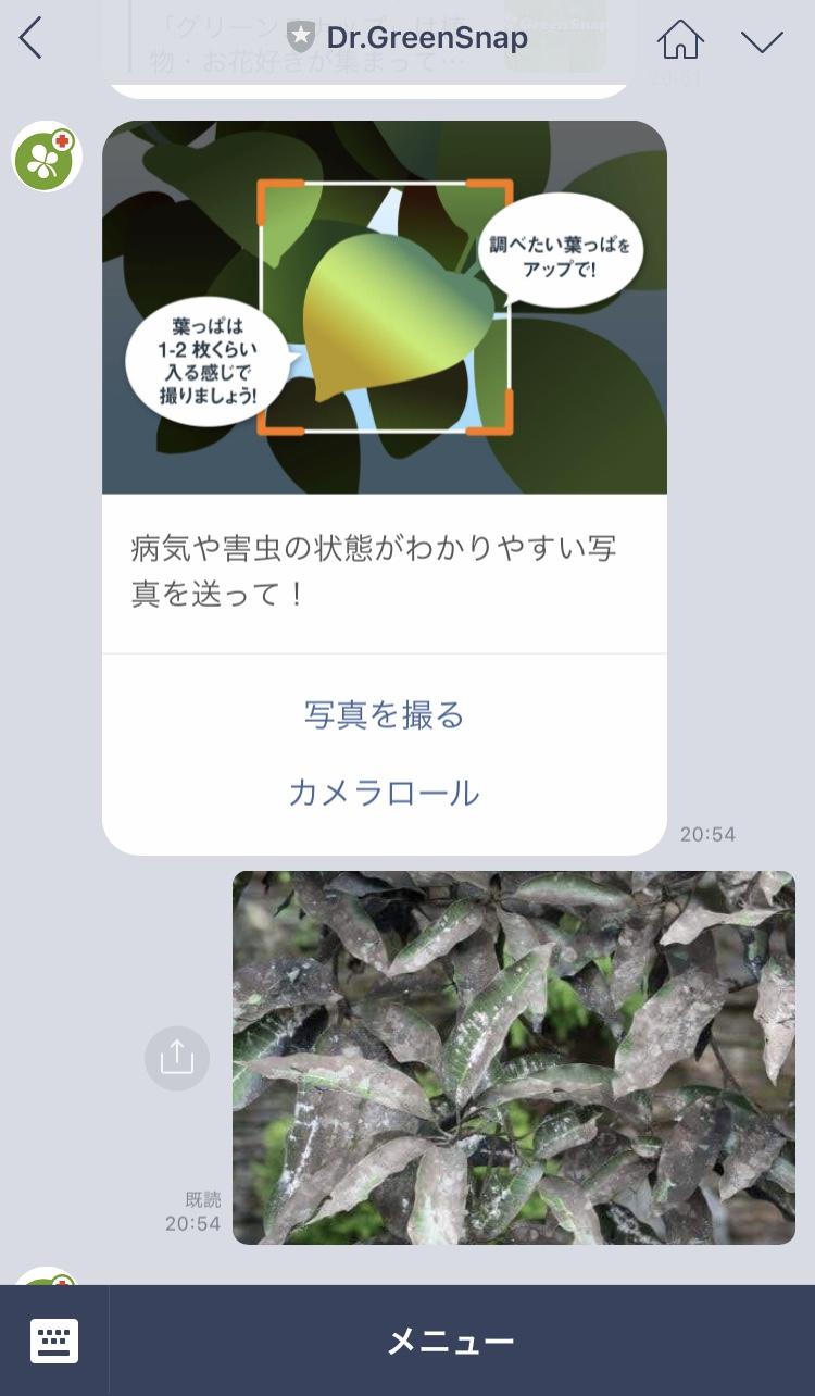 IMG 4467