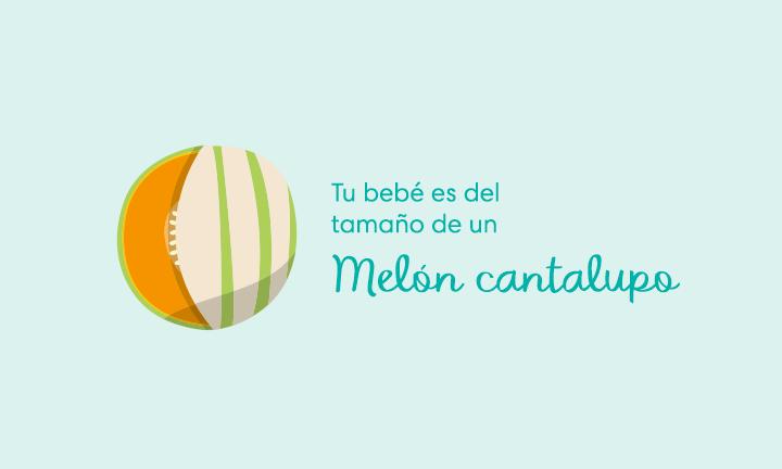 Tu bebé es del tamaño de un melón cantalupo