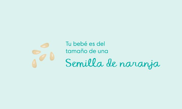 Embarazada de 5 semanas Síntomas y sugerencias Tu bebé es del tamaño de una semilla de naranja