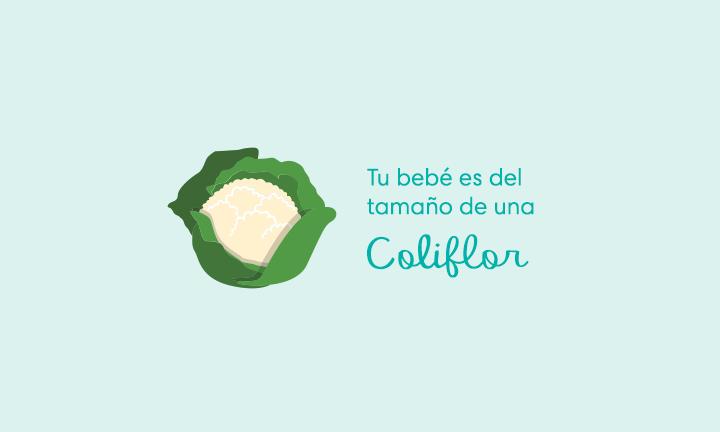 Tu bebé es del tamaño de una coliflor