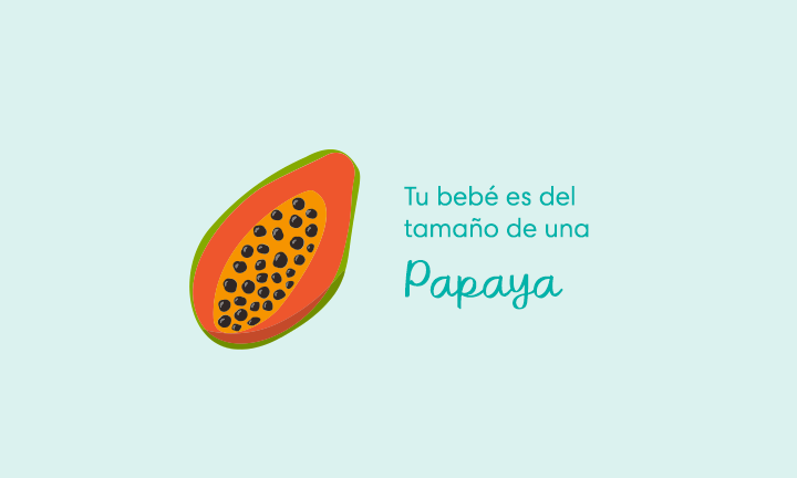 Tu bebé es del tamaño de una papaya
