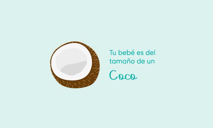 Tu bebé es del tamaño de un coco