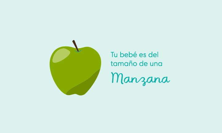 Tu bebé es del tamaño de una manzana
