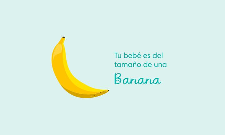 Tu bebé es del tamaño de una banana