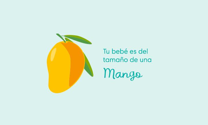 Tu bebé es del tamaño de un mango